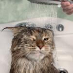 5 typů pro šetření vody v koupelně