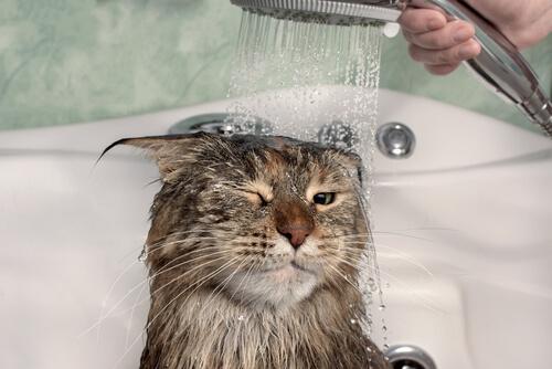 Mokrá kočka pod sprchou